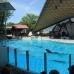 Dolphins at Marineland