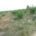 Palm_plantation1_Photo